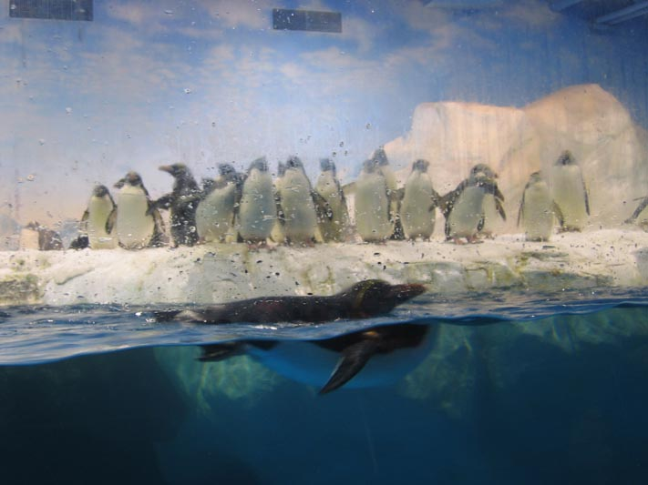 海生館-企鵝餵食秀