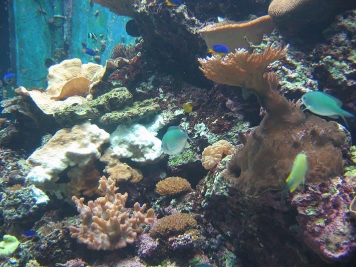 海生館-珊瑚礁生態