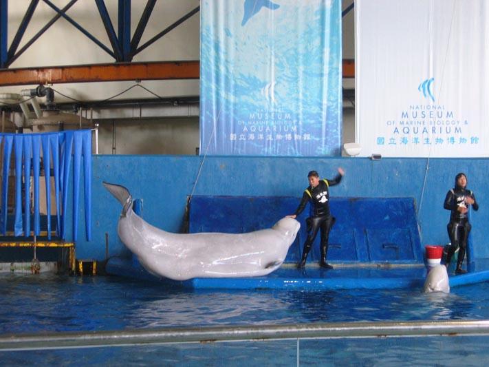 海生館-小白鯨