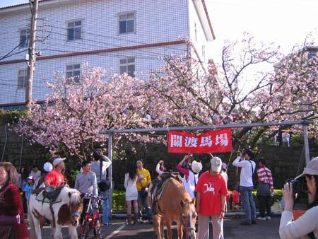 櫻花樹下馬場