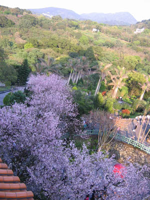 塔上俯瞰櫻景