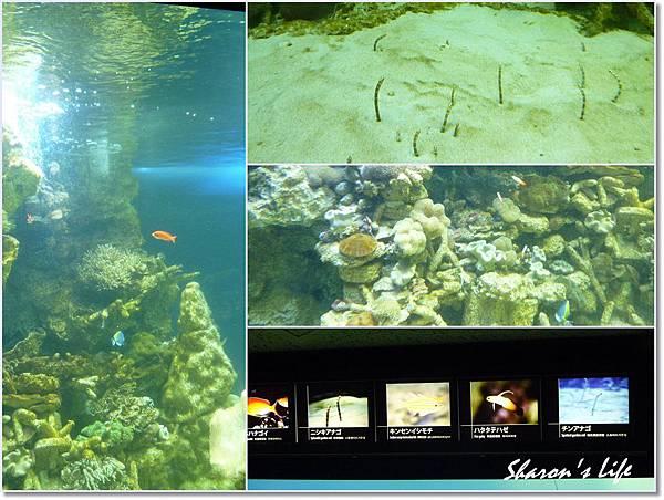 水族館3.jpg