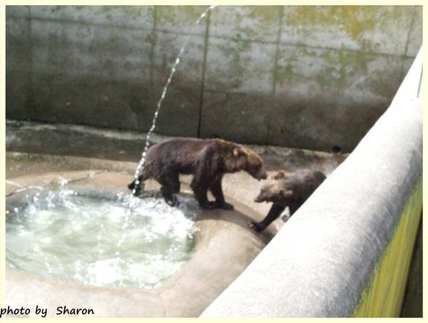熊打架.jpg
