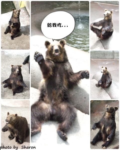 熊來了集合.jpg