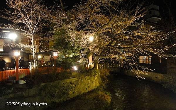 2015京都夜櫻 04
