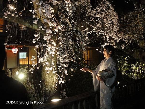 2015京都夜櫻 06