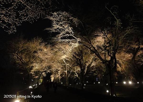 2015京都夜櫻~二条城 08