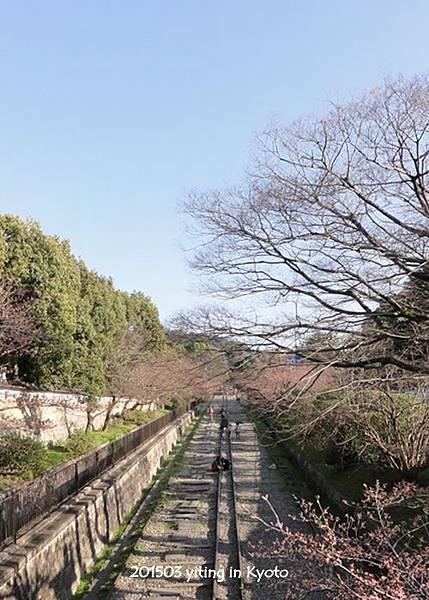 京都賞櫻~蹴上鐵道 01