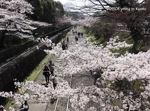 京都賞櫻~蹴上鐵道 08