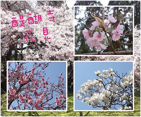 京都賞櫻~醍醐寺三寶院 05