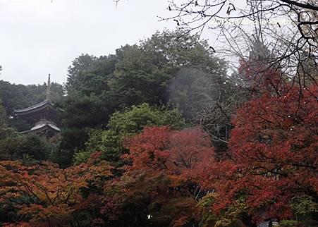 京都洛南 今熊野觀音寺 06