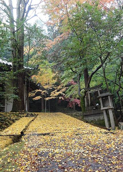 京都洛南 今熊野觀音寺 08