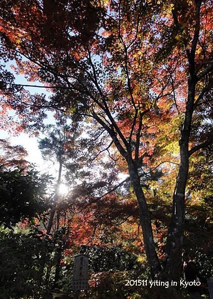 京都嵐山 天龍寺 04