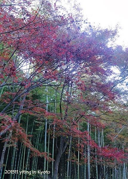 京都嵐山 天龍寺 05