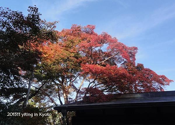 京都嵐山 常寂光寺 03