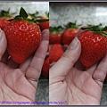 草莓-1.jpg