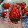 篸雞-草莓-1.jpg