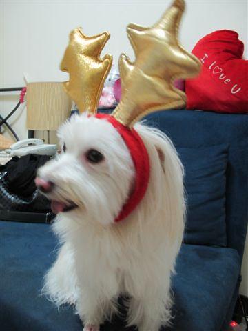 2011聖誕快樂
