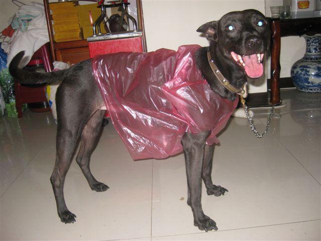 最新型雨衣