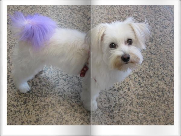 包子妹染紫毛
