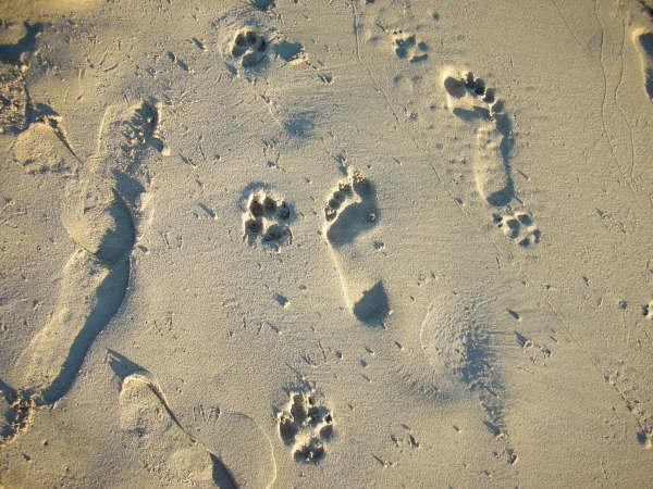 人與犬 幸福的足跡