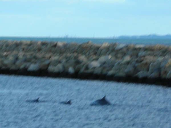 絕景!海豚親子三連發!