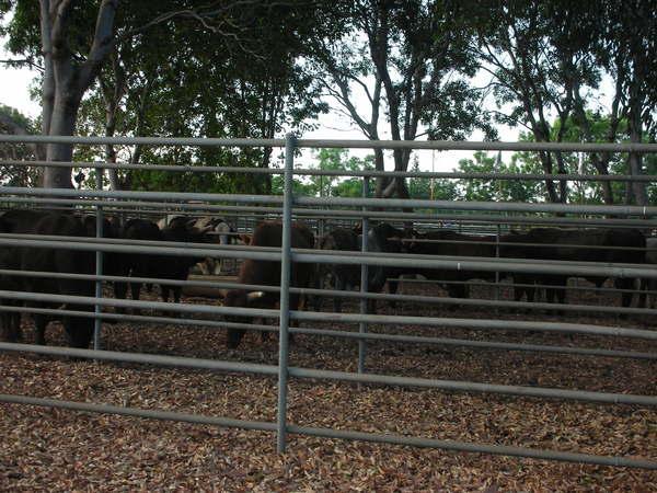 20070818 darwin rodeo 003.jpg