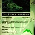 鹹水鱷魚的介紹