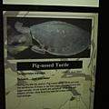大家有志一同的決定就叫豬鼻子龜
