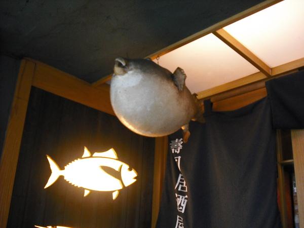 玄海門口的河豚