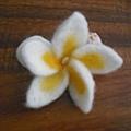 羊毛氈之白色雞蛋花