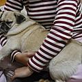 麥麥2009酣睡在媽媽懷中