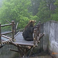 注意! 熊出沒!