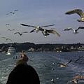 超多海鷗跟著船飛~