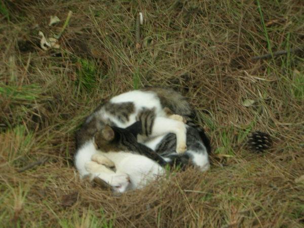 兩隻蜷曲睡在一起的可愛貓咪^^