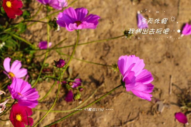 IMG_2862-116