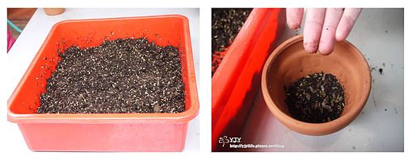 DIY移盆_土壤肥料
