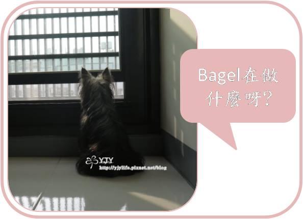 bagel_life_a1