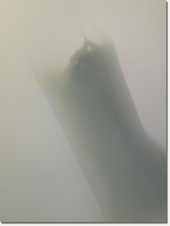 霧裡的祕密01.jpg