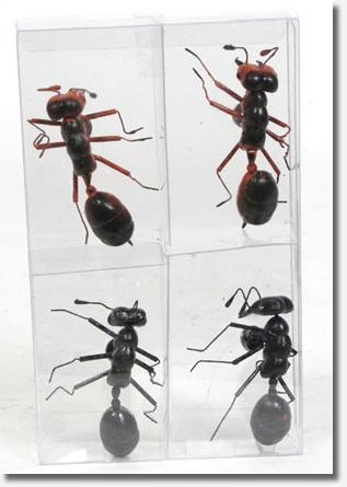 MOOImagnets ants.jpg