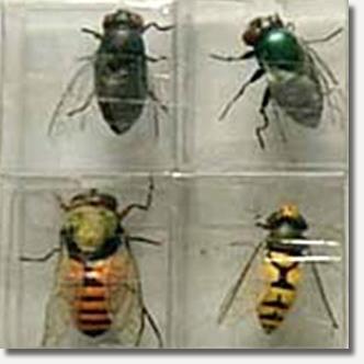 MOOIfly magnets.jpg