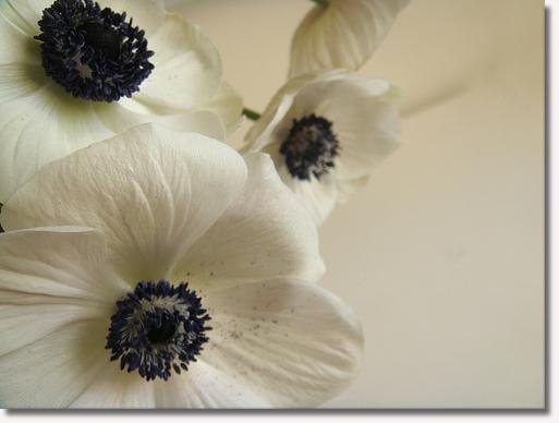 bwflowers1.jpg
