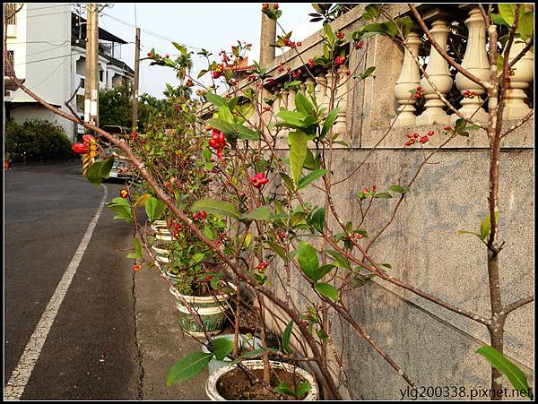 IMG_1068a