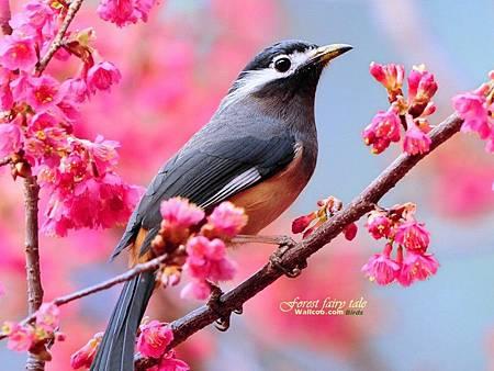 animal_cute_little_birds_hd_wallpapers_02_8254_m