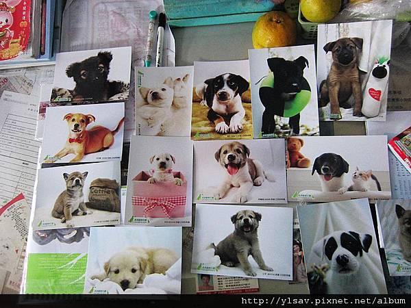 2012年.流浪動物花園.桌曆附贈的明信片<部份宜蘭收容所幼犬照>