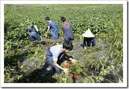 105年10月16日楊梅高榮社區埤塘溼地復育特色課程活動,地點高榮濕地