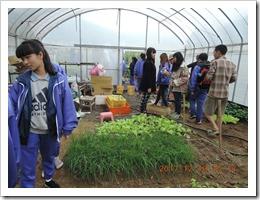 觀摩溫室的栽種