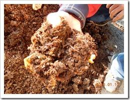 土中的蚯蚓數量繁多