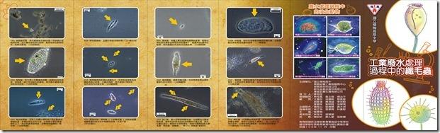 摺頁-工業廢水處理過程中的纖毛蟲-外
