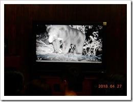 1070427自動照相機野外拍攝野生動物影像